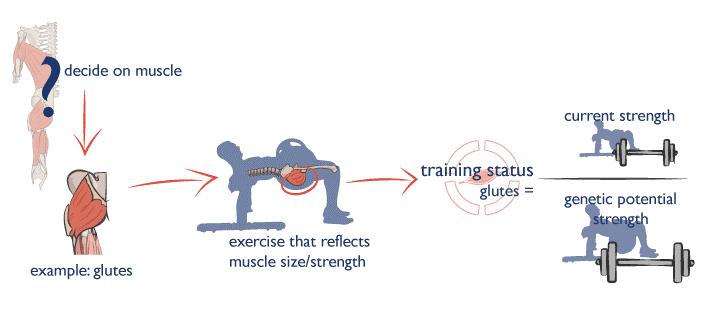 El hip thrust es el ejercicio que podrá determinar el nivel de fuerza y de desarrollo muscular de tus glúteos.