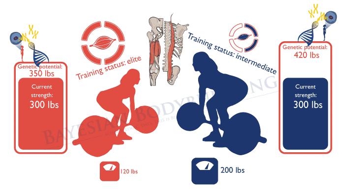 En función de tu peso corporal se puede determinar el potencial genético que tienes para desarrollar fuerza y masa muscular.