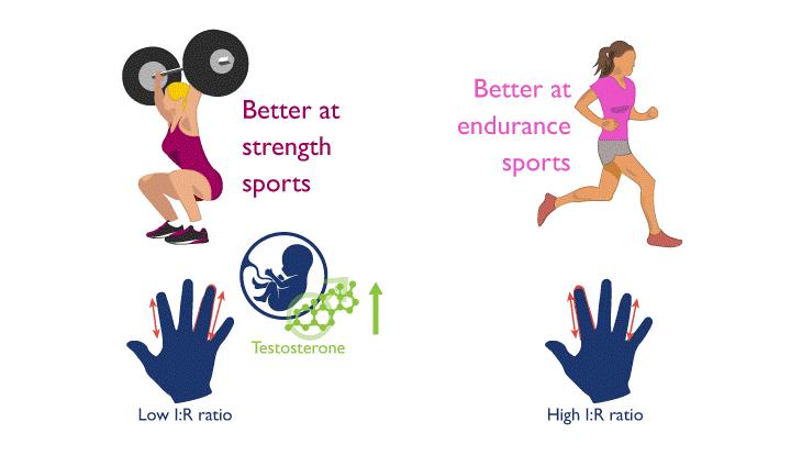 En función de la relación entre tu dedo índice y tu dedo anular puedes tener mayores o menores niveles de testosterona y pueden determinar tu predisposición genética hacia los deportes de fuerza o de resistencia.