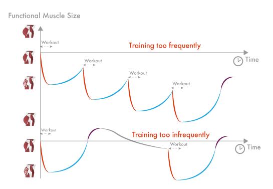 Capacidad de recuperación y adaptación de los músculos en función de la frecuencia de entrenamiento.