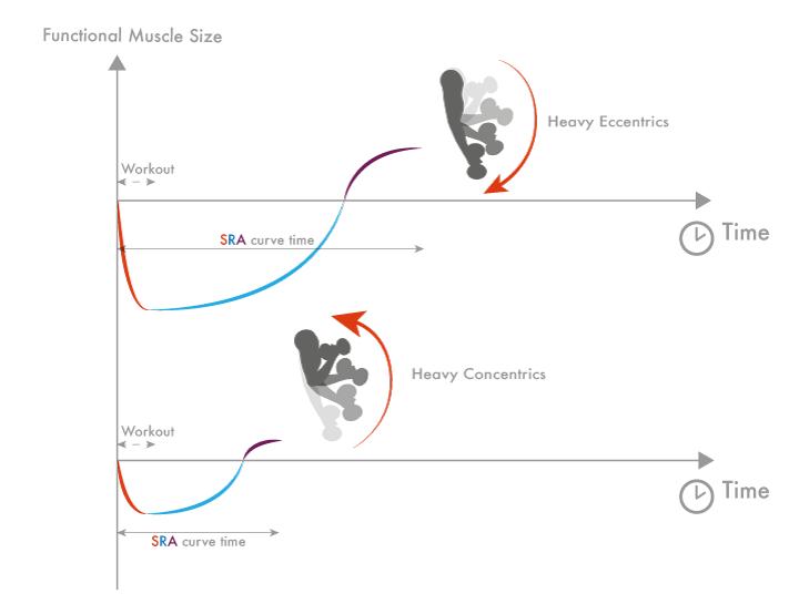 Frecuencia de entrenamiento más óptima en función de ejercicios que enfatizan las fases excéntricas de movimiento.