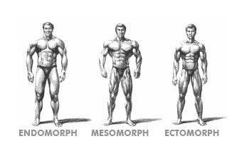 Clasificación Mesomorfo, endomorfo, ectomorfo