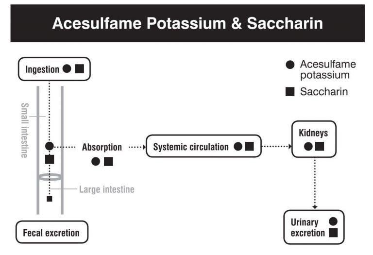 Metabolismo, absorción, digestión y excreción de la sacarina
