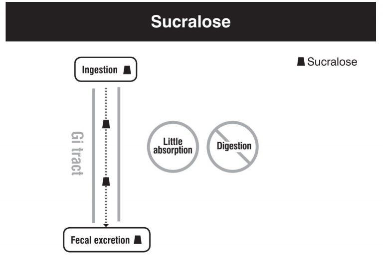 Ingestión, absorción, metabolismo y excreción de la sucralosa