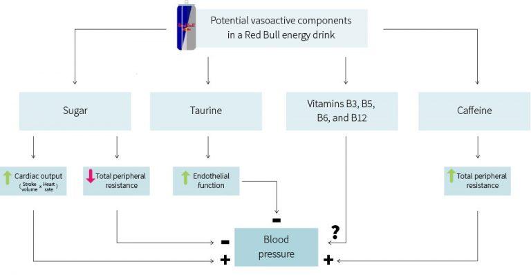 Efectos potenciales de una bebida energética y sus componentes sobre el flujo sanguíneo y la salud cardiovascular.