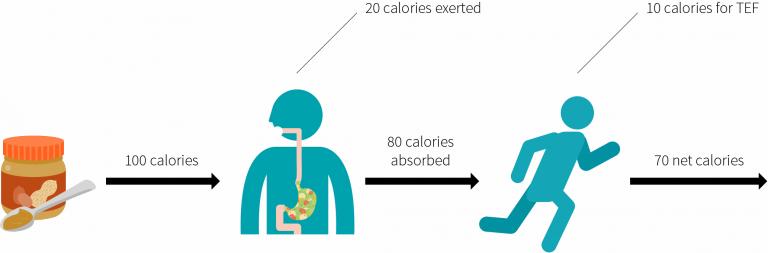 Costo energético de la digestión y absorción de los alimentos