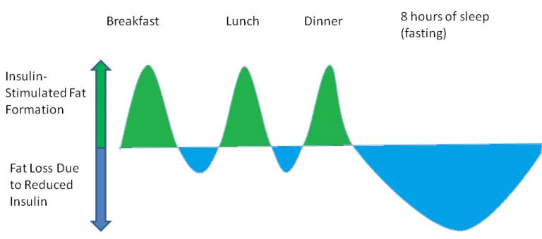 Lipólisis y lipogénesis. Respuesta de la insulina durante 24h tras ingerir alimentos.