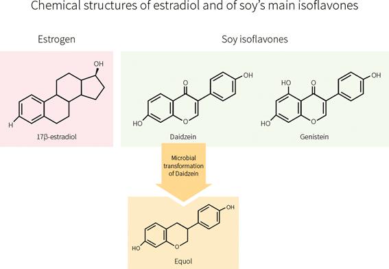 Estructura química del estradiol